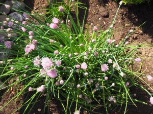 Chives- because they are already pretty...