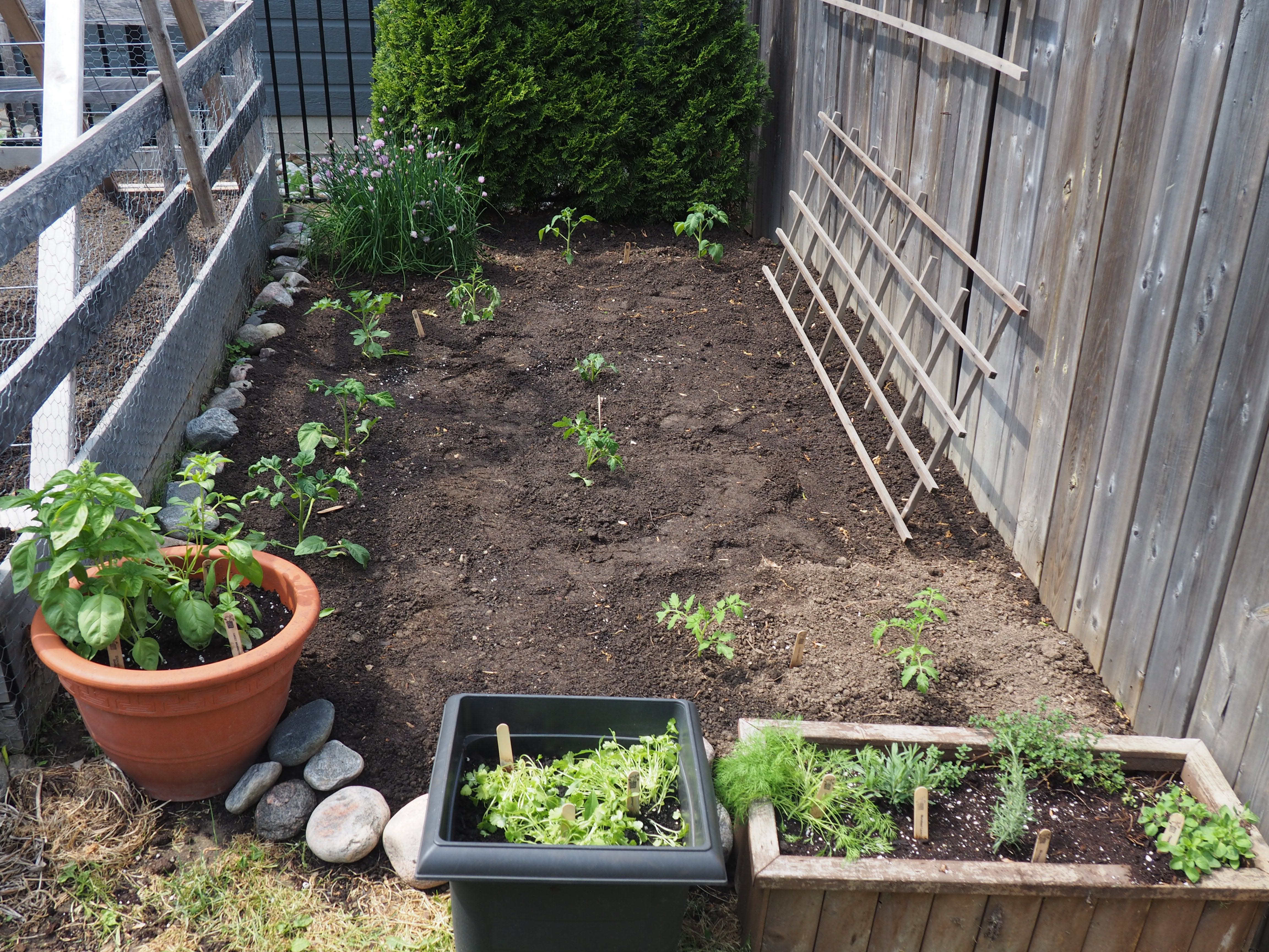 Ready set grow plants on plates for Outer garden