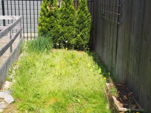Outer vegetable garden- before